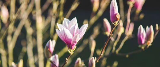 Vårens sköna lärare och artister och säsongens första retreats ute!