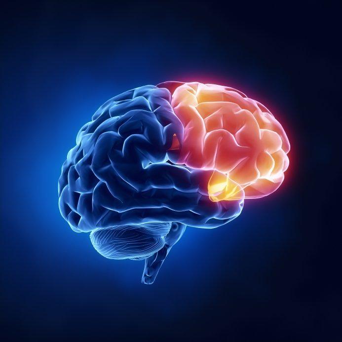 Yoga för hjärnan - brain basics